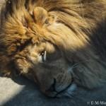 初心者でも簡単、動物園で動物の写真をうまく撮る方法