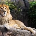 あべのハルカス、天王寺動物園で撮影 その1