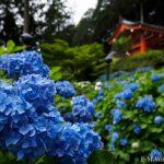 京都のあじさい寺、三室戸寺に行ってきました~その2~