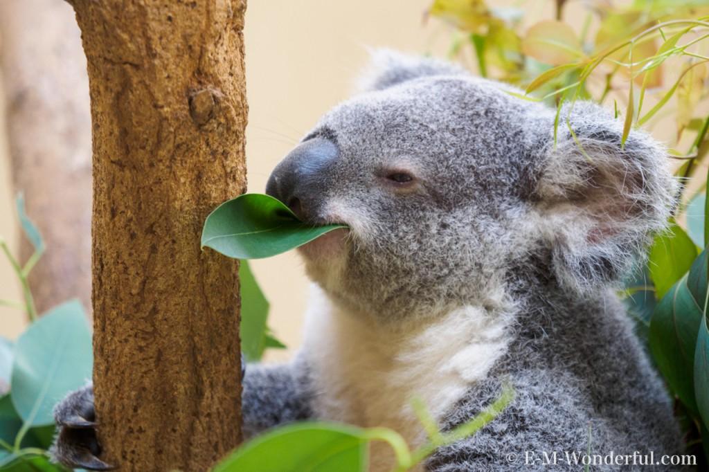 20150628 P6280386 1024x682 - 初心者でも簡単、動物園で動物の写真をうまく撮る方法