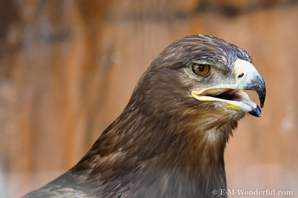 20150818 P8180656 1024x682 - 初心者でも簡単、動物園で動物の写真をうまく撮る方法