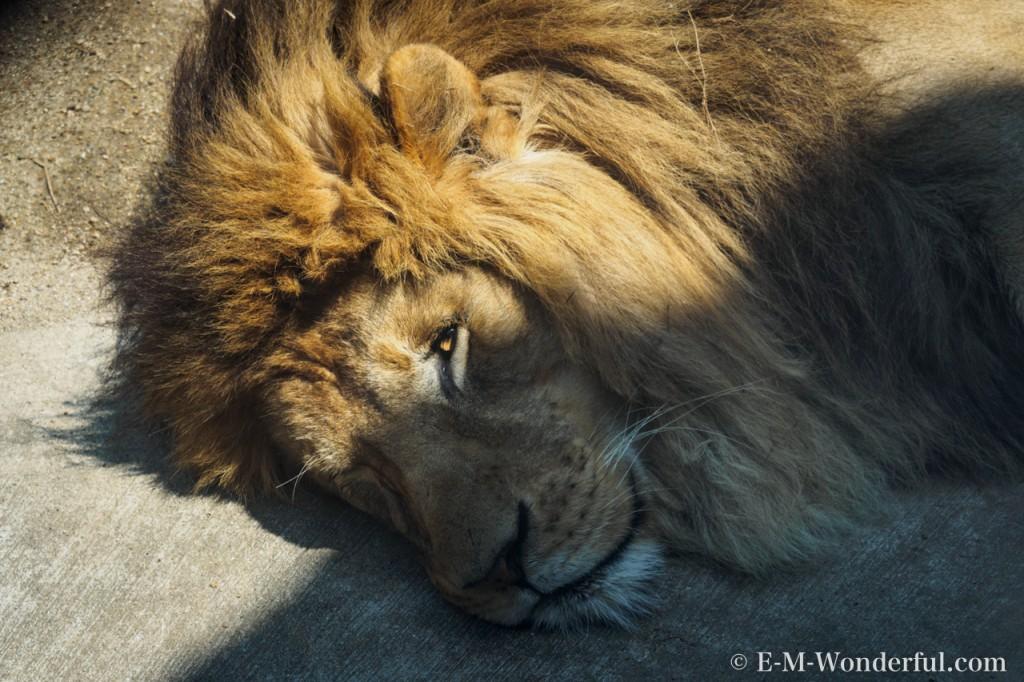 20160419 P4190209 1024x682 - 初心者でも簡単、動物園で動物の写真をうまく撮る方法