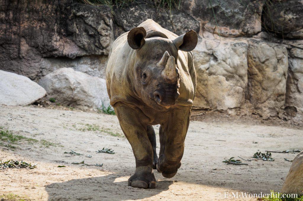 20160419 P4190356 2 3 1024x682 - 初心者でも簡単、動物園で動物の写真をうまく撮る方法