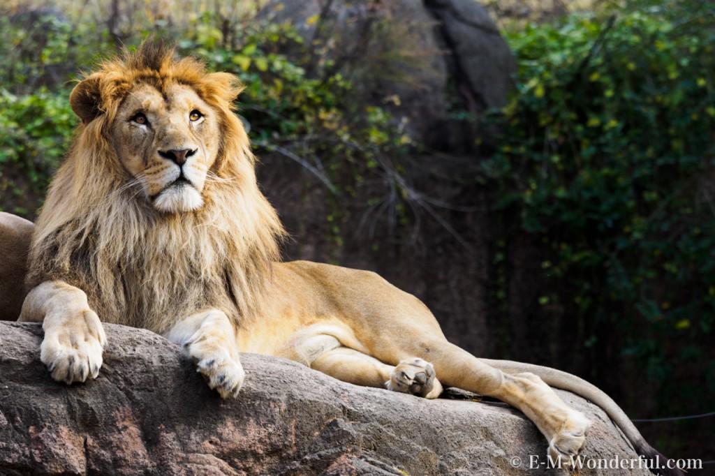 PB300468 1024x682 - あべのハルカス、天王寺動物園で撮影 その1
