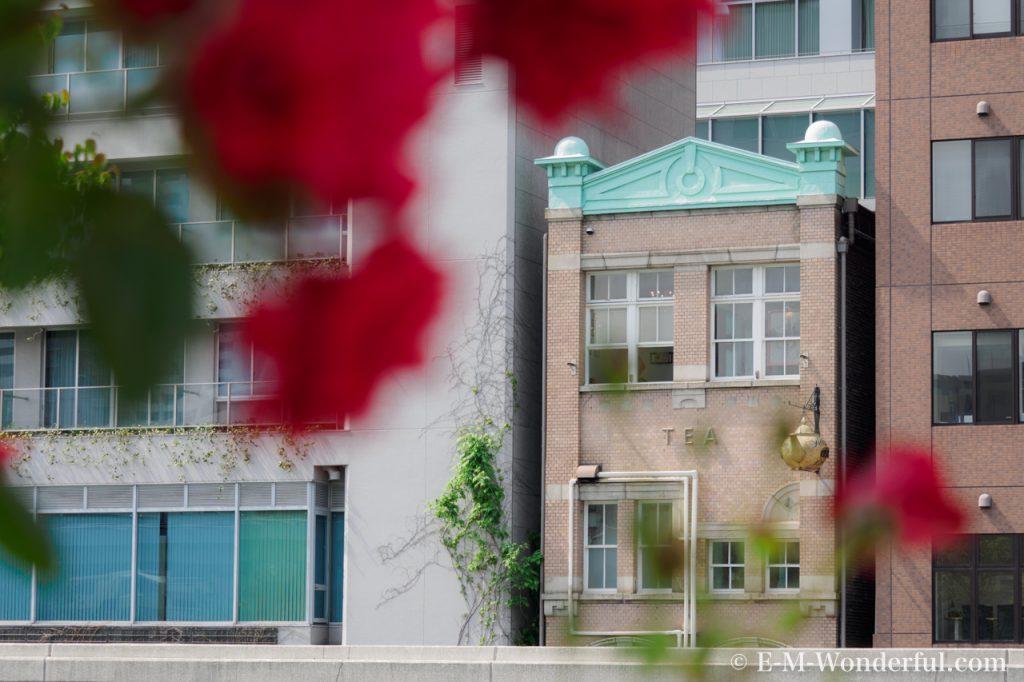 20160515 P5150684 1024x682 - 都会の中心でたくさんのバラを見れる、中之島公園バラ園その2