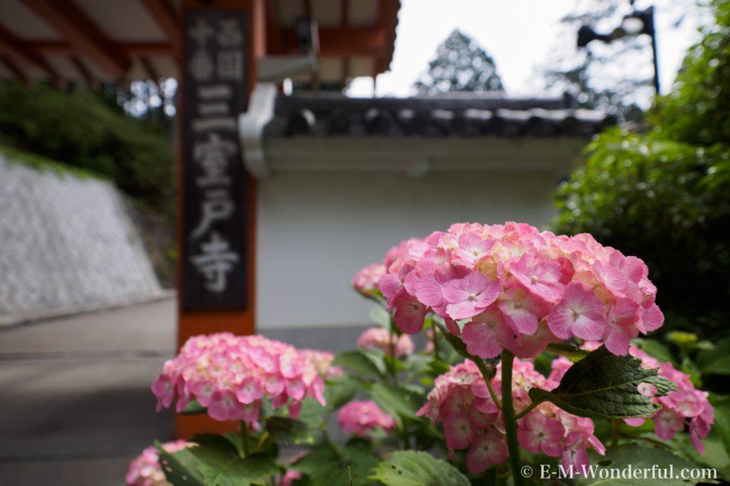 20160611 P6110081 1024x682 - 京都のあじさい寺、三室戸寺に行ってきました~その1~