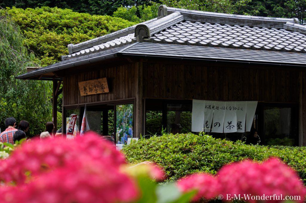20160611 P6110442 1024x682 - 京都のあじさい寺、三室戸寺に行ってきました~その2~
