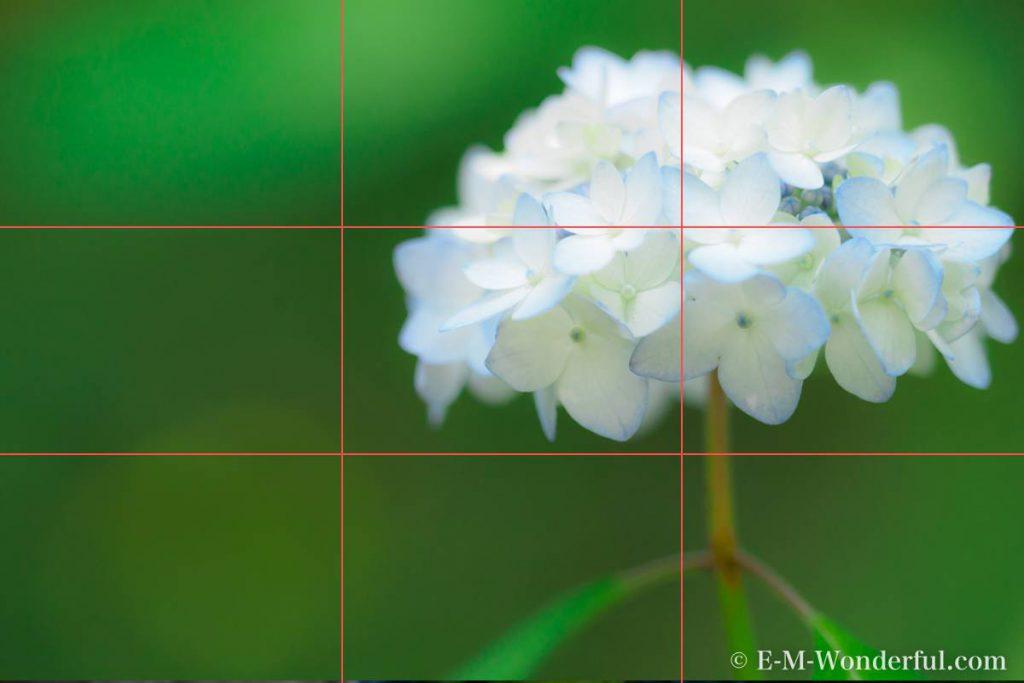 3ef0bdba05f675feff413e7f6ba38300 1024x683 - 初心者でも簡単、デジイチで紫陽花(アジサイ)を綺麗に撮る方法