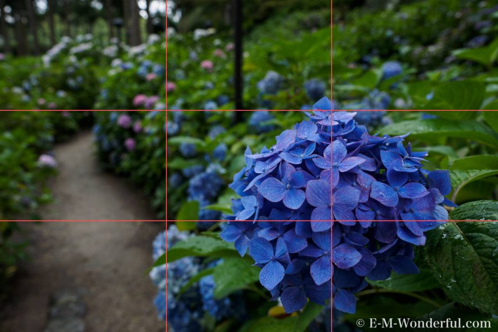 5fabfd5001e03a3375ba7551e0a1df2b 1024x683 - 初心者でも簡単、デジイチで紫陽花(アジサイ)を綺麗に撮る方法