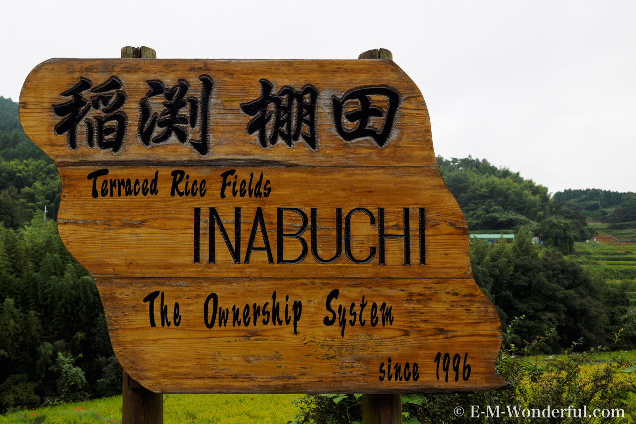 20160924 P9240056 - 明日香村に彼岸花(ヒガンバナ)を見に行ってきました