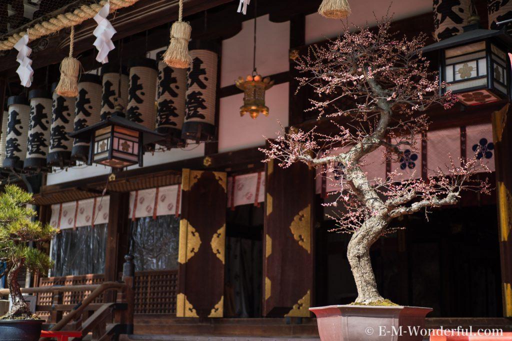 20170226 P2260177 1024x682 - 大阪天満宮に「盆梅と盆石展」を見に行ってきました
