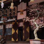 大阪天満宮に「盆梅と盆石展」を見に行ってきました