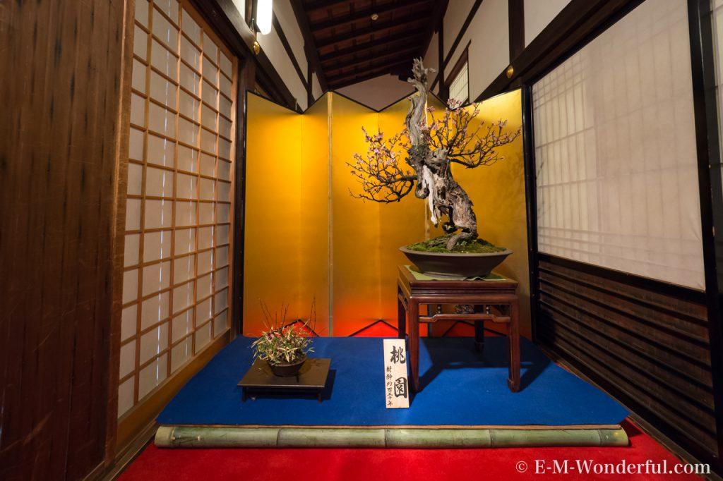 20170226 P2261115 1024x682 - 大阪天満宮に「盆梅と盆石展」を見に行ってきました