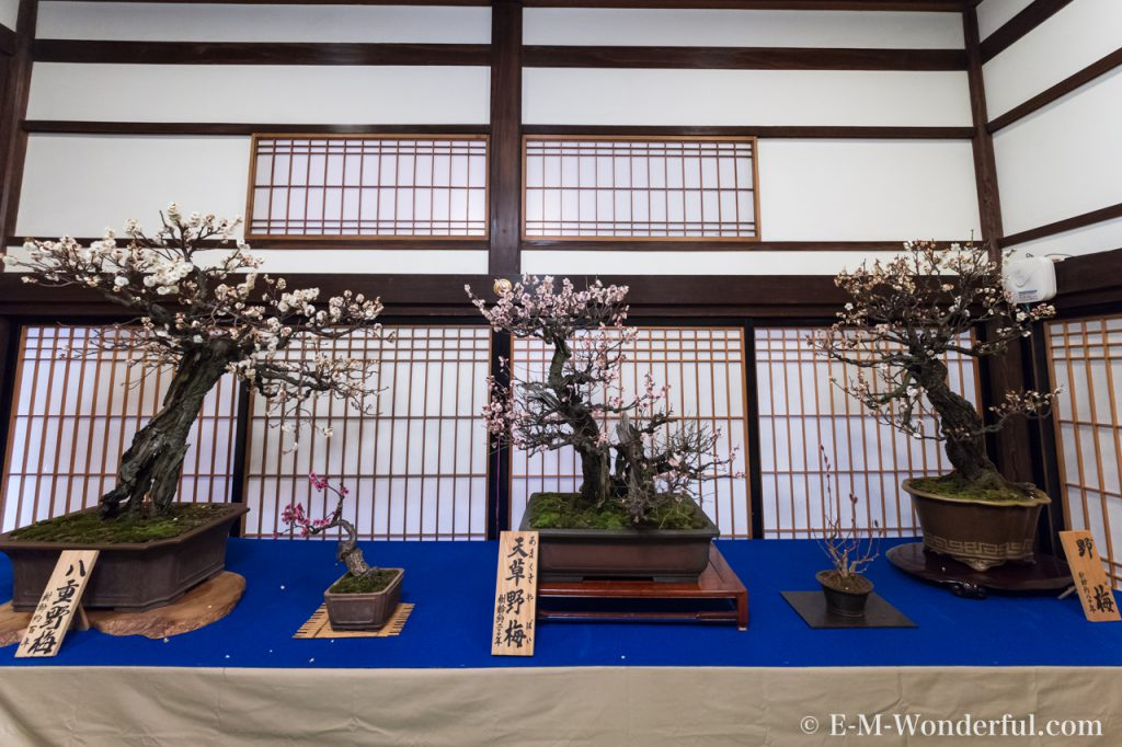 20170226 P2261118 1024x682 - 大阪天満宮に「盆梅と盆石展」を見に行ってきました