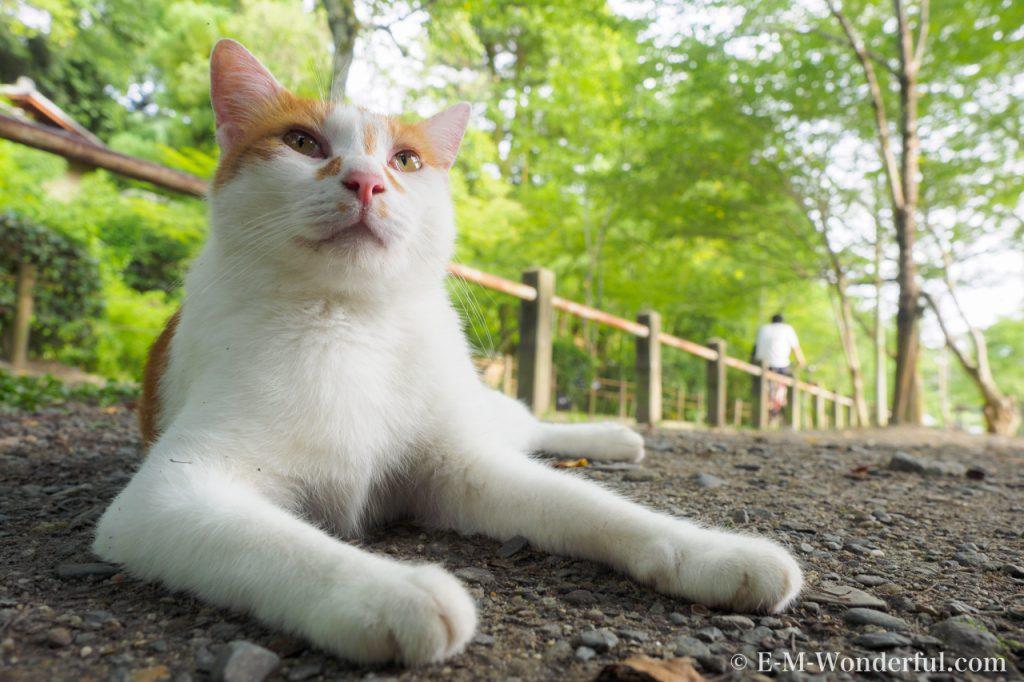 20150712 P7120242 1 1024x682 - 初心者でも簡単、デジイチで野良猫を可愛く撮る方法