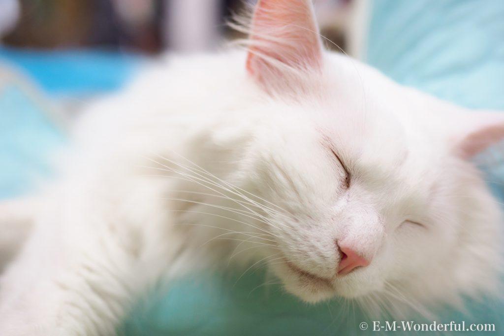 20170502 P5020115 1 1024x682 - 初心者でも簡単、デジイチで野良猫を可愛く撮る方法