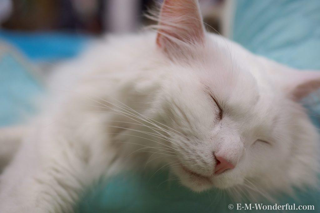 20170502 P5020115 2 1 1024x682 - 初心者でも簡単、デジイチで野良猫を可愛く撮る方法