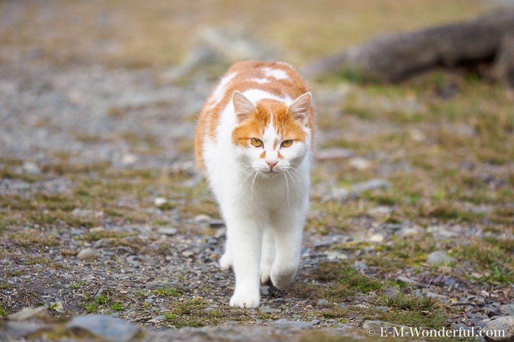 P2111006 1 1024x682 - 初心者でも簡単、デジイチで野良猫を可愛く撮る方法