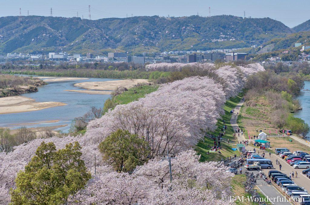 20180330 P3300885 AuroraHDR2018 edit 1024x678 - 京都の人気お花見スポット、淀川河川公園背割提の桜を見に行ってきました