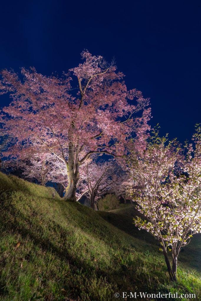 20180401 P4010357 HDR Edit 2 682x1024 - 初心者でも簡単、デジイチで桜(さくら)を綺麗に撮る方法