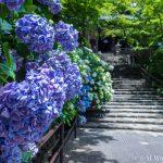 20180617 P6170740 1 150x150 - 奈良の長谷寺で紫陽花を撮影してきました