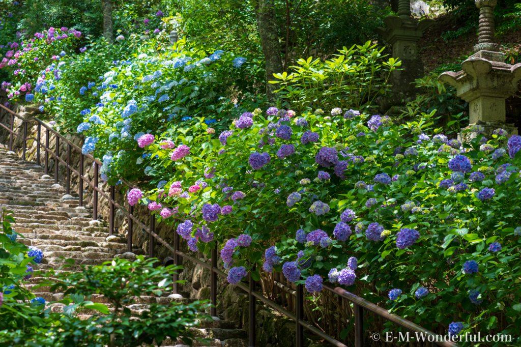 20180617 P6170798 1024x682 - 奈良の長谷寺で紫陽花を撮影してきました