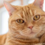 20180714 P7140031 Edit Edit 1 150x150 - 初心者でも簡単、デジイチで猫カフェのねこを可愛く撮る方法