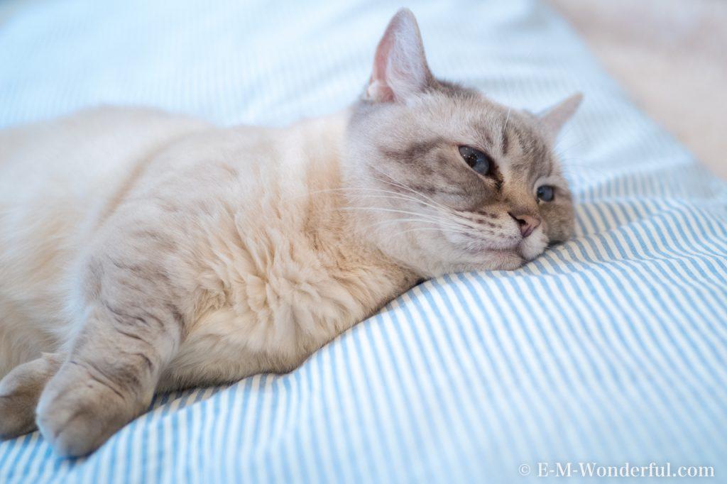 20180714 P7140054 Edit 1024x682 - 初心者でも簡単、デジイチで猫カフェのねこを可愛く撮る方法