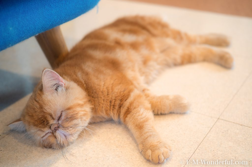 20180714 P7140085 Edit 1024x682 - 初心者でも簡単、デジイチで猫カフェのねこを可愛く撮る方法
