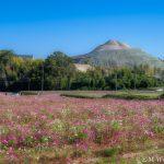 20181026 PA260183 AuroraHDR2019 edit Edit 1 150x150 - 懐かしい田園風景の広がる、コスモスの里穂谷で写真撮影してきました