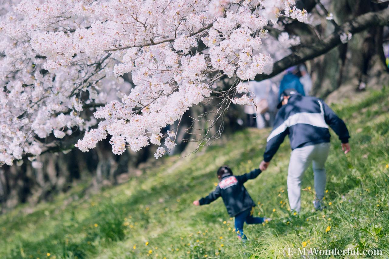 20180330 P3300384 Edit - 桜の花を簡単に華やかに、Luminarの桜の花のLOOKSレビュー