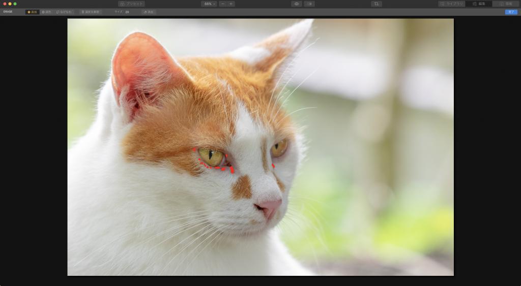 1dac4c900d5a689018cd292d918a3657 1024x563 - Luminarで猫写真を編集するヒント(Luminar 4)