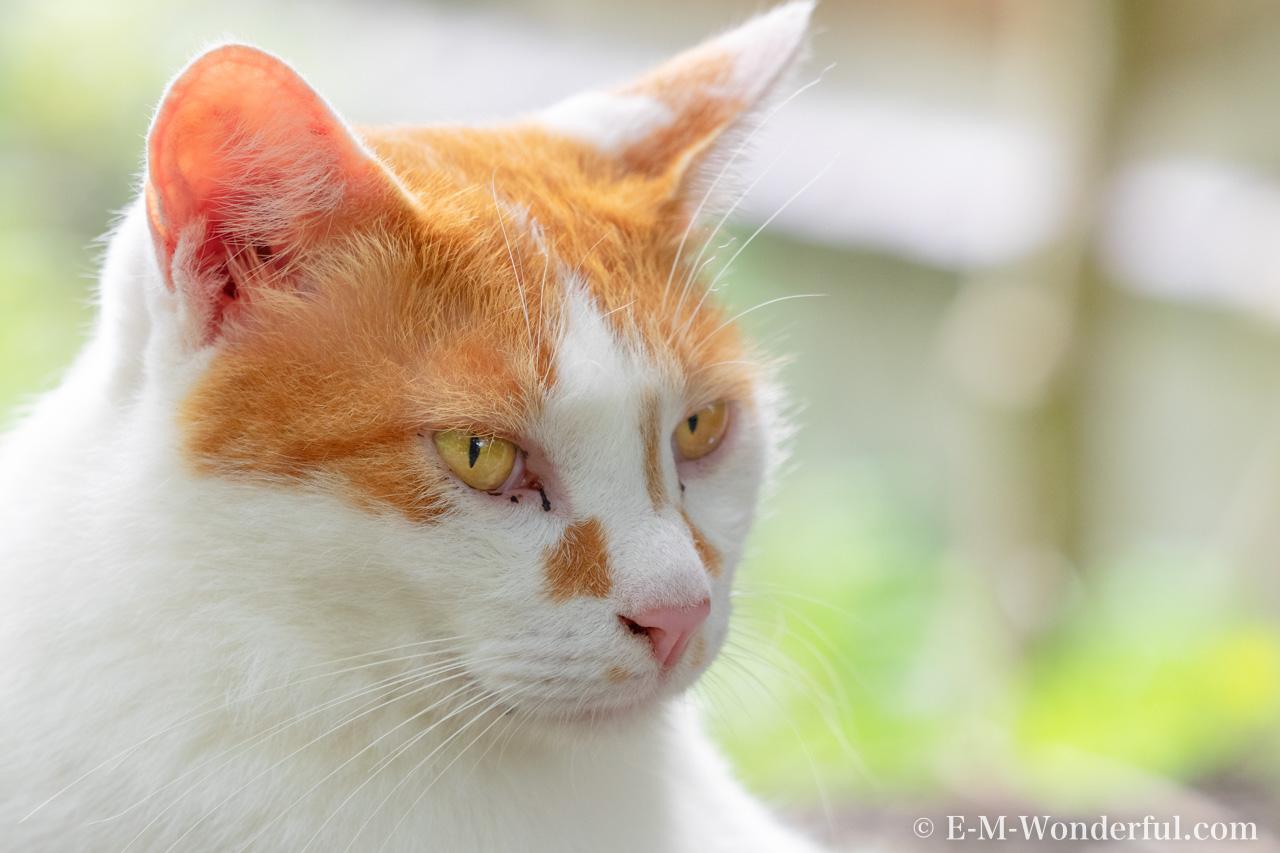 20150712 P7120290 Edit 3 Edit 2 - Luminarで猫写真を編集するヒント(Luminar 4)