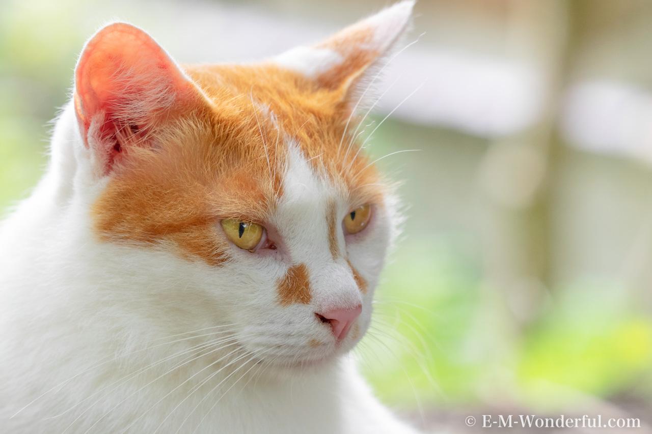 20150712 P7120290 Edit 3 Edit Edit - Luminarで猫写真を編集するヒント(Luminar 4)