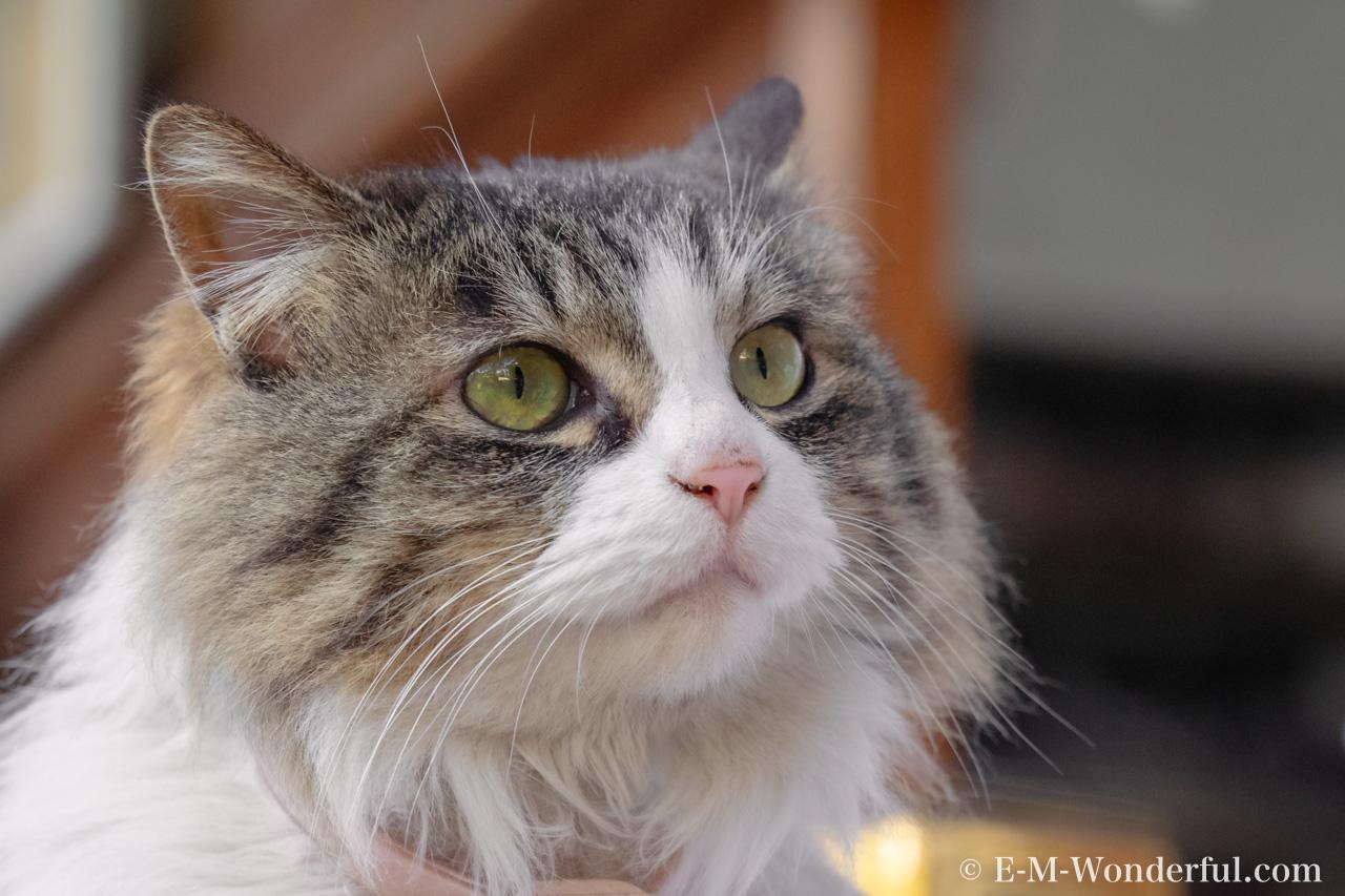20160228 P2280596 Edit 2 - Luminarで猫写真を編集するヒント(Luminar 4)