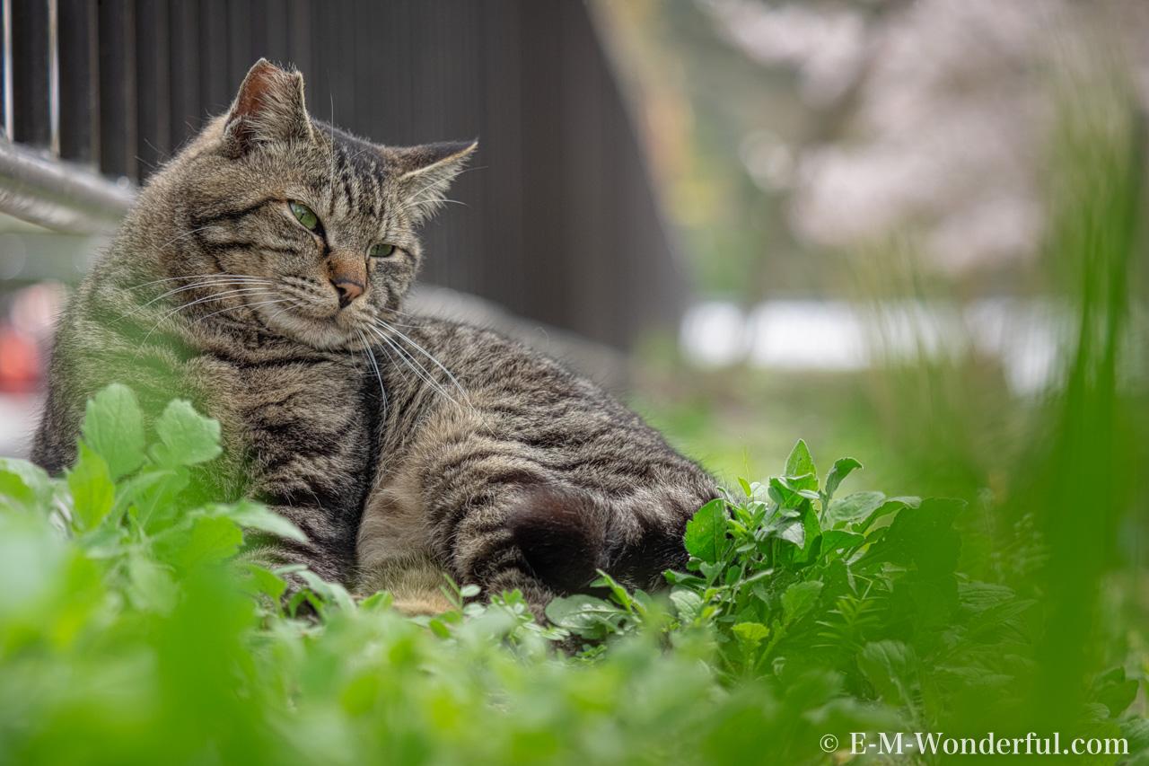 20160405 P4050333 Edit Edit - Luminarで猫写真を編集するヒント(Luminar 4)