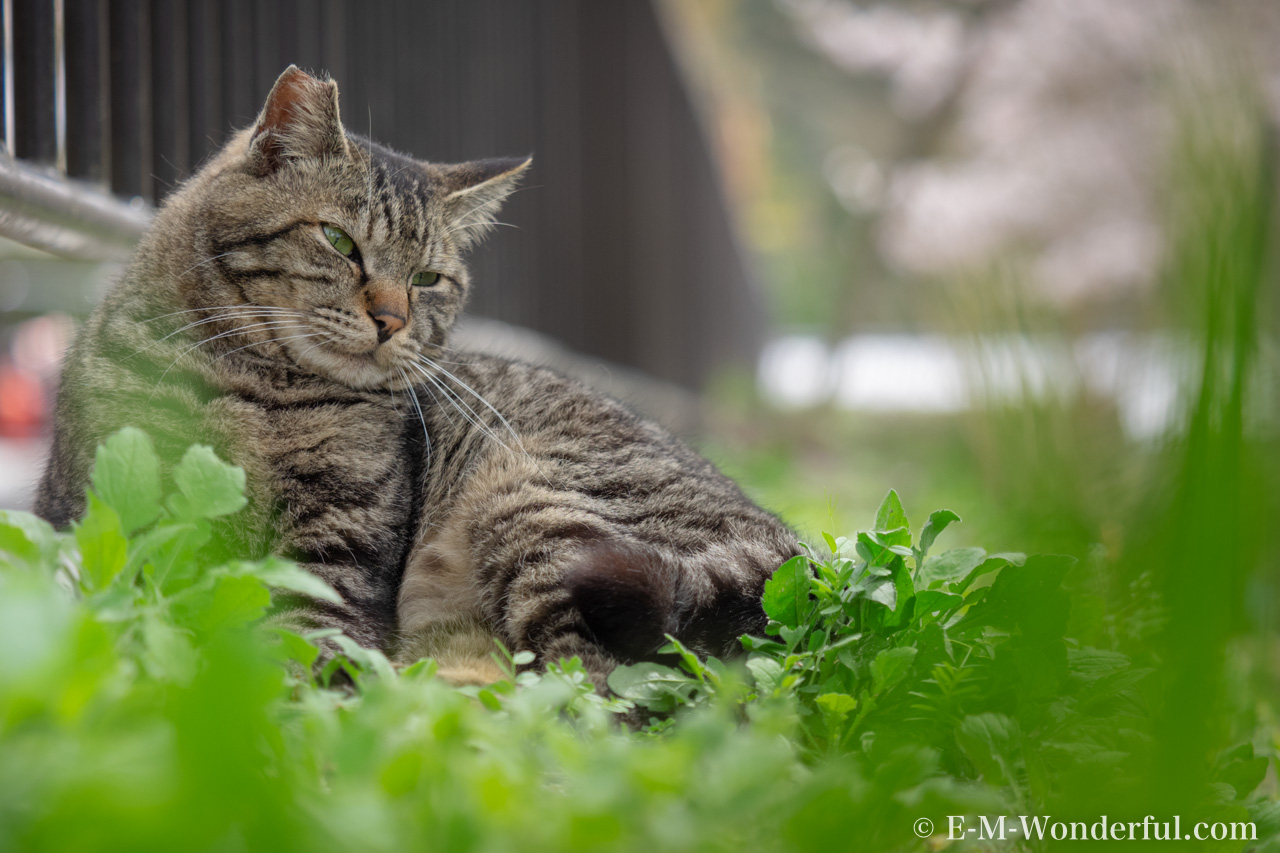 20160405 P4050333 Edit - Luminarで猫写真を編集するヒント(Luminar 4)