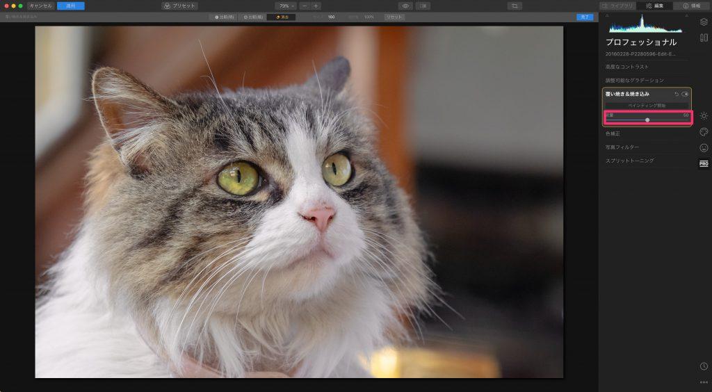 206b0f9590cae2c5910dfaa0e4af5674 1024x564 - Luminarで猫写真を編集するヒント(Luminar 4)