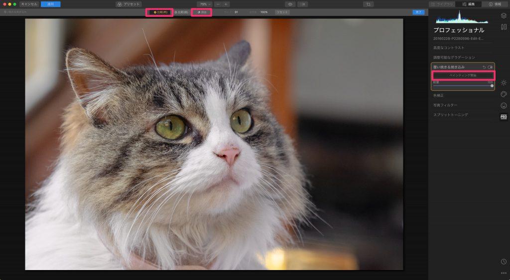 6036ded90fceaf322fb1b7fc897cadbe 1024x564 - Luminarで猫写真を編集するヒント(Luminar 4)