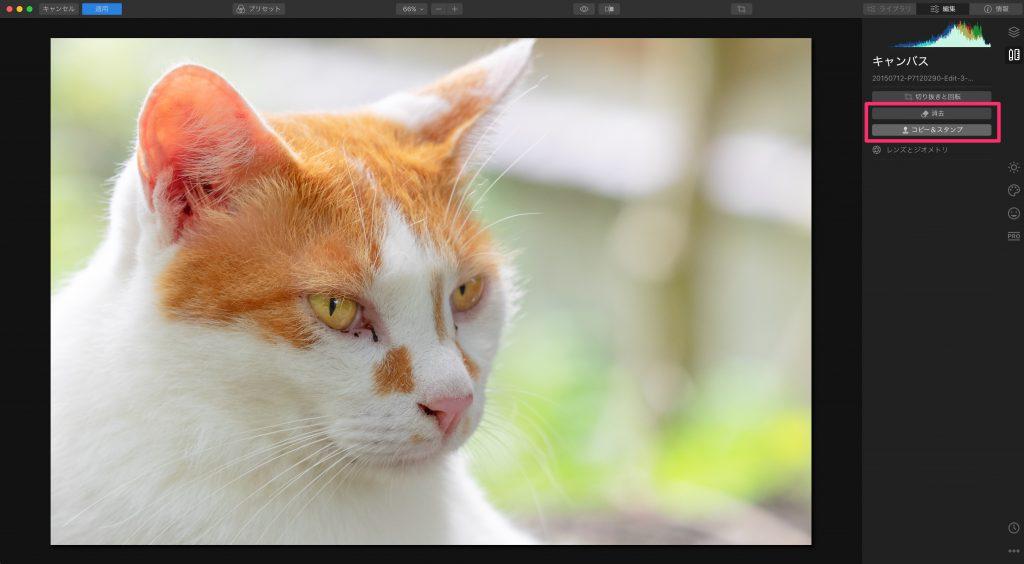 79f7ce026a94995a7726549103b4a03a 1024x564 - Luminarで猫写真を編集するヒント(Luminar 4)