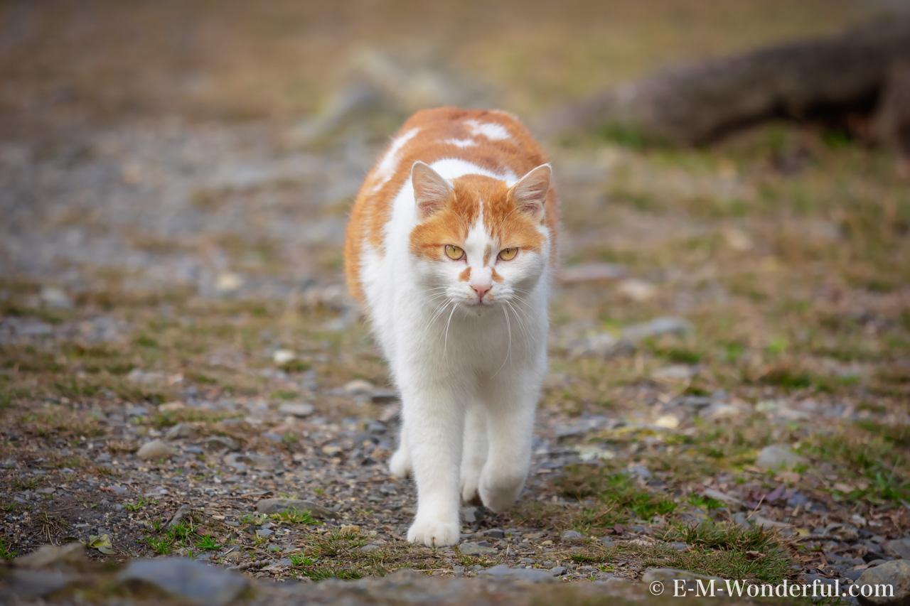 P2111006 Edit Edit - Luminarで猫写真を編集するヒント(Luminar 4)