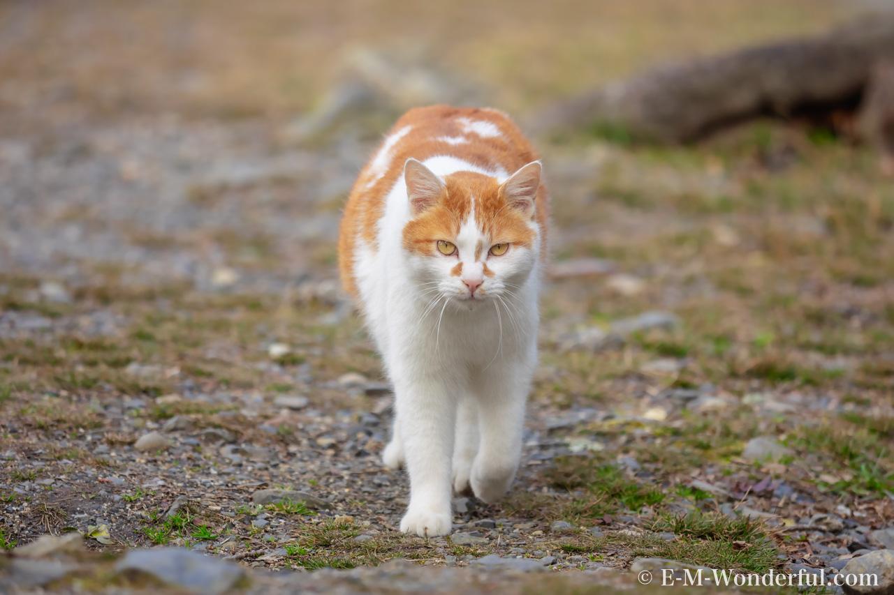 P2111006 Edit - Luminarで猫写真を編集するヒント(Luminar 4)