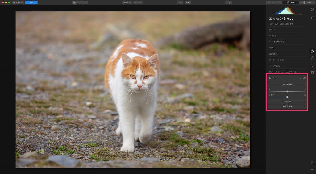 d52d361833623fc612bf4e96d40db02d 1024x564 - Luminarで猫写真を編集するヒント(Luminar 4)