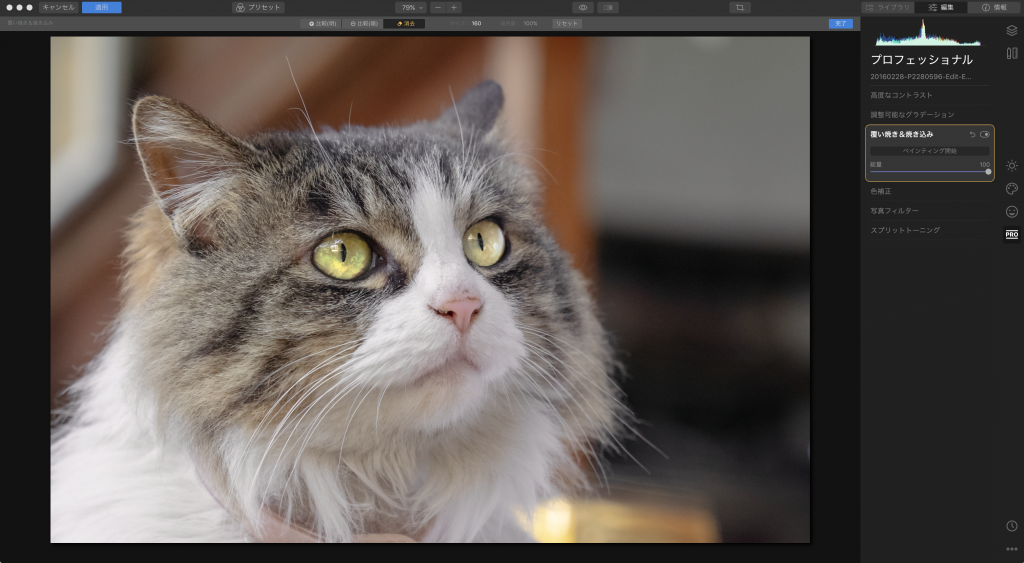 f6fe0a280a947d2ec3d72665451a40e3 1024x563 - Luminarで猫写真を編集するヒント(Luminar 4)
